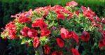 Pflanzenfotografie - Tipps für florale Meisterwerke im Bild