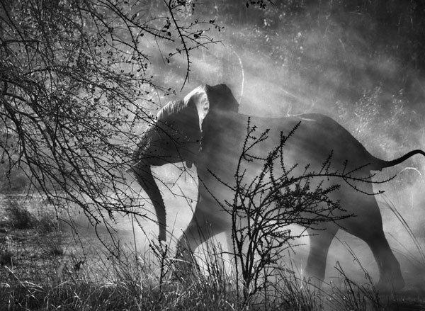 Elephant von Sebastião Salgado