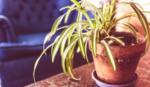 Stockfotografie - Pflanze